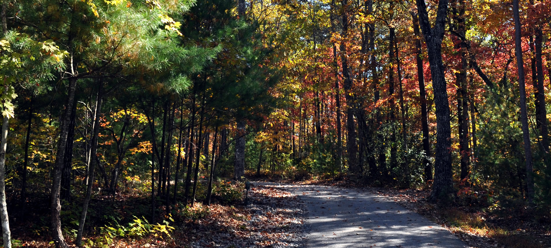 A road thru the woods in Autumn with all the different fall colors