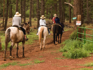 Four horseback riders approach a wooded trail
