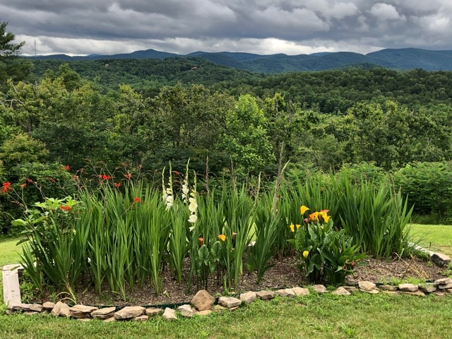 A view of the Blue Ridge Mountains, including plenty of green leaves and flowers.