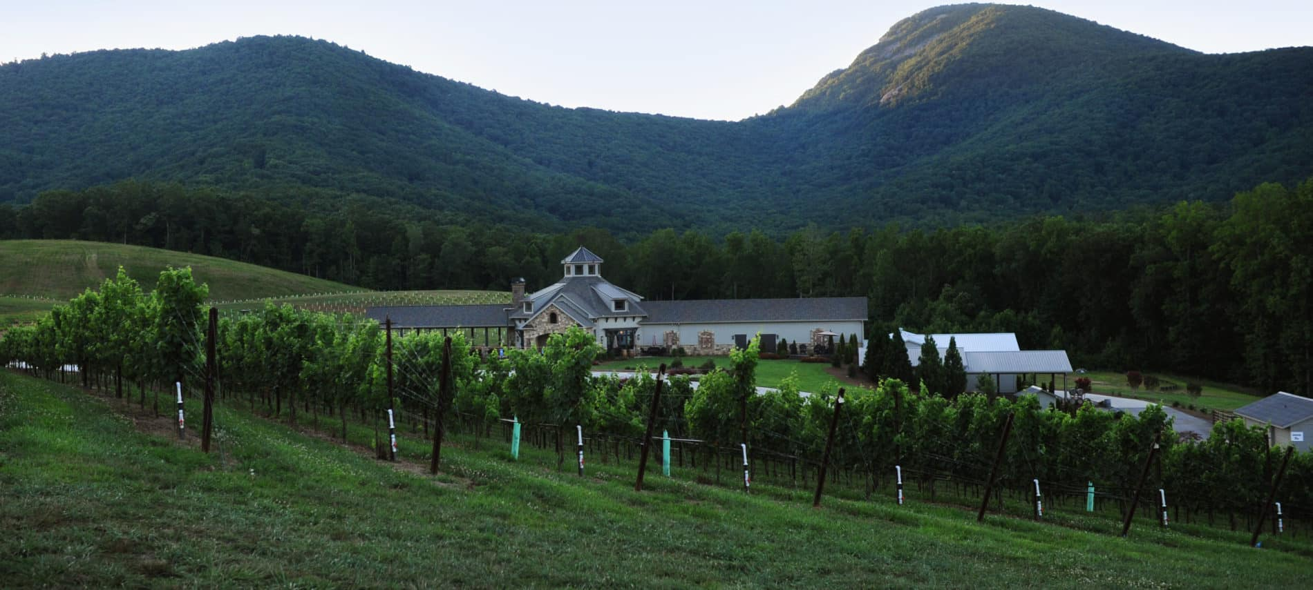 PHOTO OF THE VINEYARDS AT YONAH MOUNTAIN WINERY.